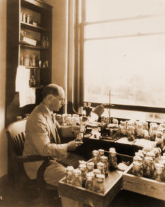 Throughout his scientific career, Muller studied the fruit fly for the insights that model system could provide into genetics.